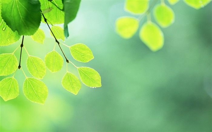 8 Soft Focus Green Leaves Pictures-Ethereal Green Leaves photos Views:7367