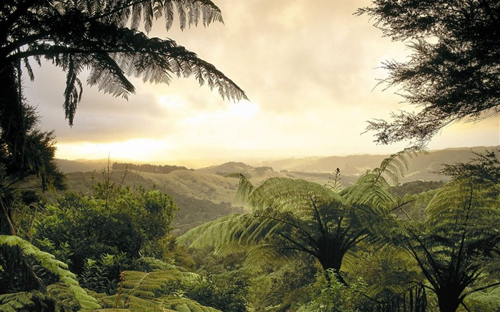 New Zealand-South Island Forest Wallpaper Views:6962