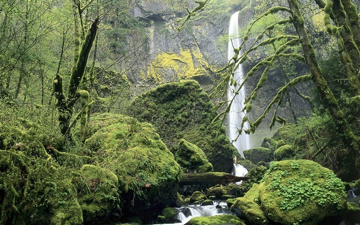 Oregon-Columbia River Gorge National Scenic Wallpaper Views:4942