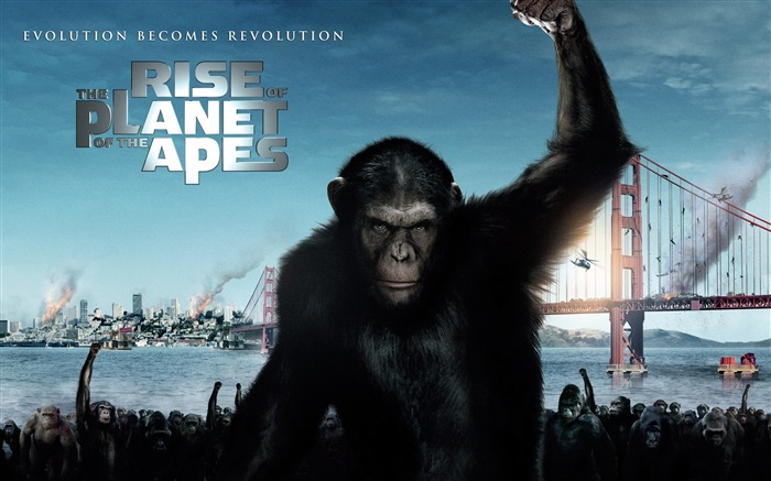 Rise of the Planet of the Apes movie wallpaper Views:6451