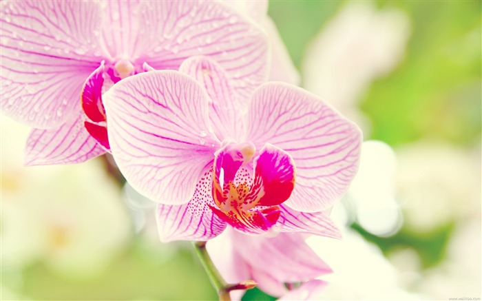 under the orchid wallpaper macro Views:18597