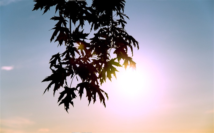 Against the Sun-Nature Landscape wallpaper selected Views:6739 Date:9/28/2011 12:18:10 AM