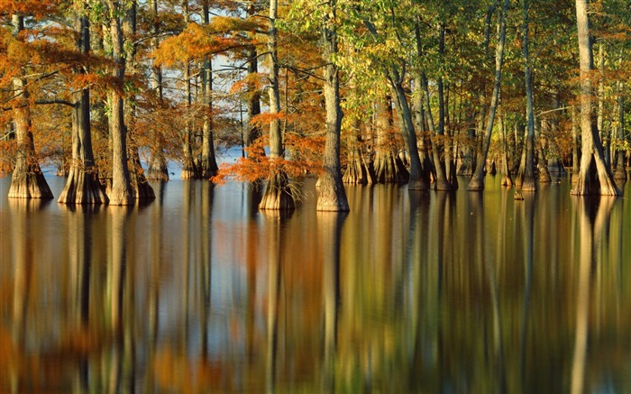 Autumn trees in water- Autumn Landscape wallpaper Views:11053