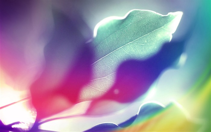 Colorful leaves under the sun-abstract design wallpaper background glare 01 Views:5463