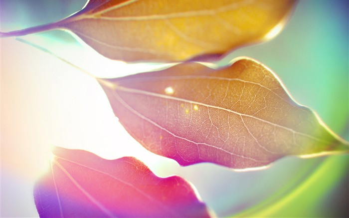 Colorful leaves under the sun-abstract design wallpaper background glare Views:6611