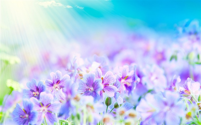 Dreamlike flowers-Seasonal flowers Views:9595