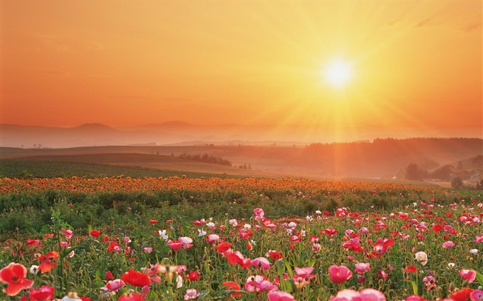 Flower Field-Summer romance Feelings Views:9655