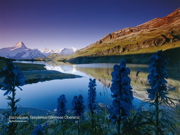 Grindelwald - Bach Lake Wallpaper 01 Views:8416 Date:9/19/2011 1:37:36 AM