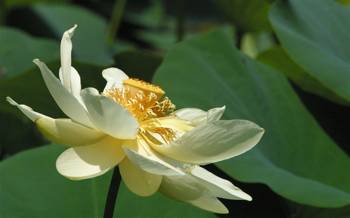 Isolated lotus-Life because of you beautiful Views:4886