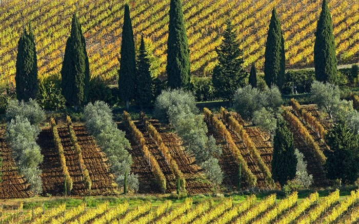 Italy Tuscany - Wine Estate wallpaper Views:7728