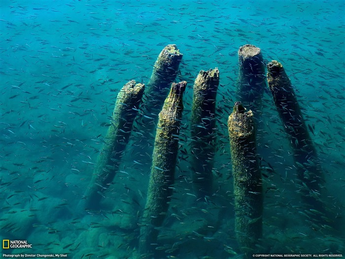 Lake Ohrid Dock Remains- National Geographic wallpaper selected Views:7298 Date:9/10/2011 3:42:20 AM