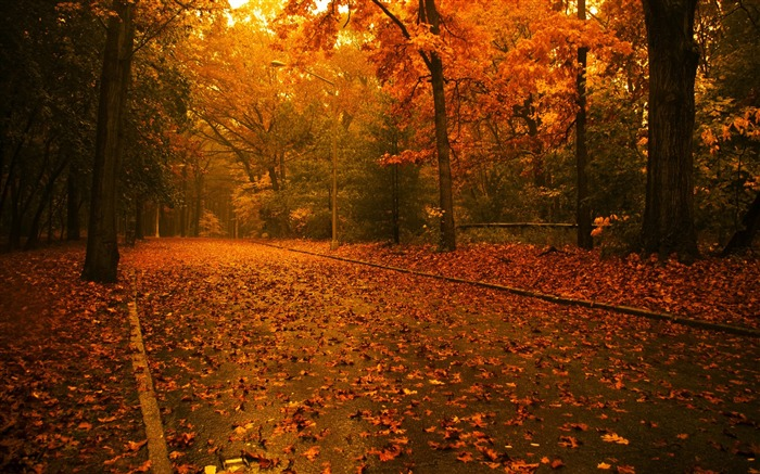 Maple forest is full of romantic- Autumn Landscape wallpaper Views:52890