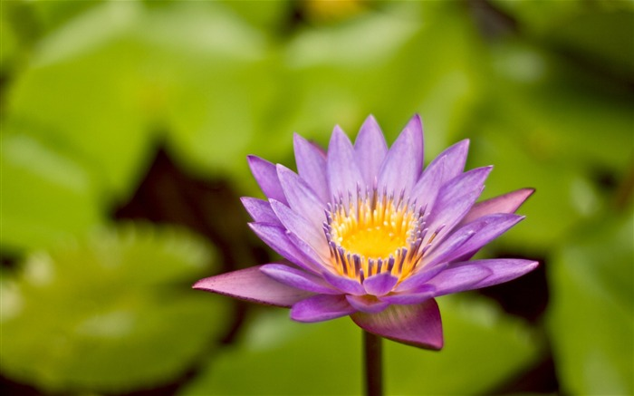 Purple Lotus-Life because of you beautiful Views:4191