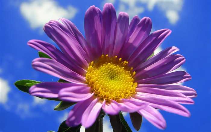Purple flower under blue sky-Life because of you beautiful Views:3431