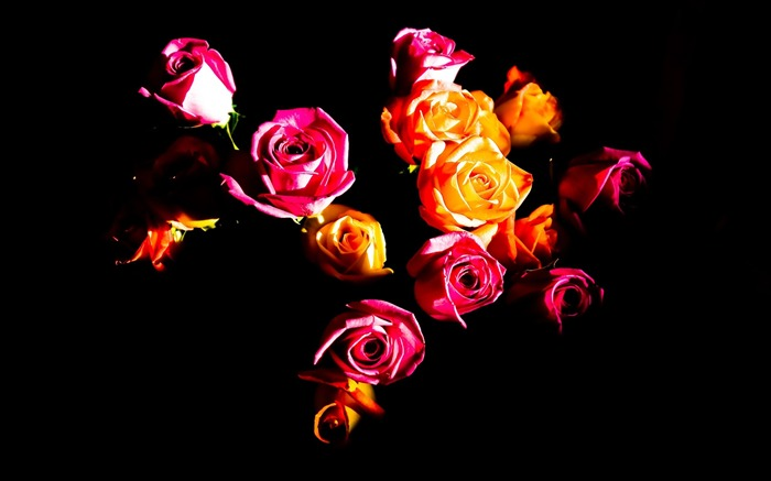 Red and yellow roses-Seasonal flowers Views:5397