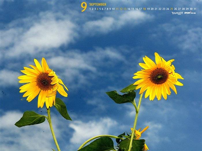 September-Calendar-Sunflower wallpaper Views:6056 Date:9/2/2011 5:41:38 AM