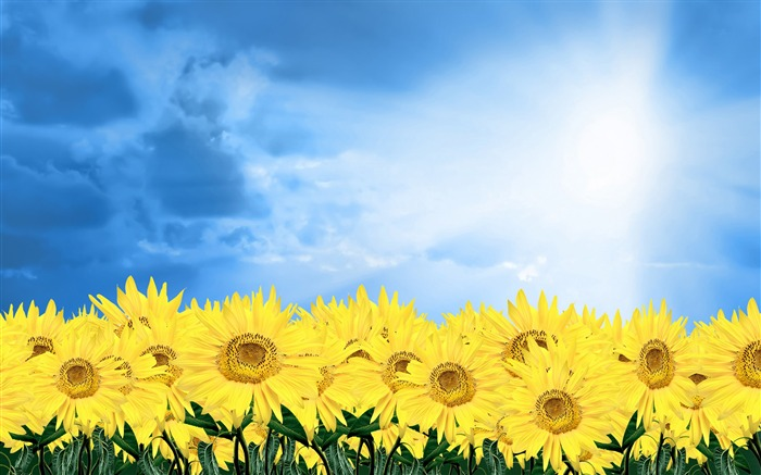 Sunshine sunflower-Summer romance Feelings Views:9497