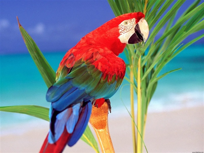 Tropical Colors Parrot-Animal World Series Wallpaper Views:6243