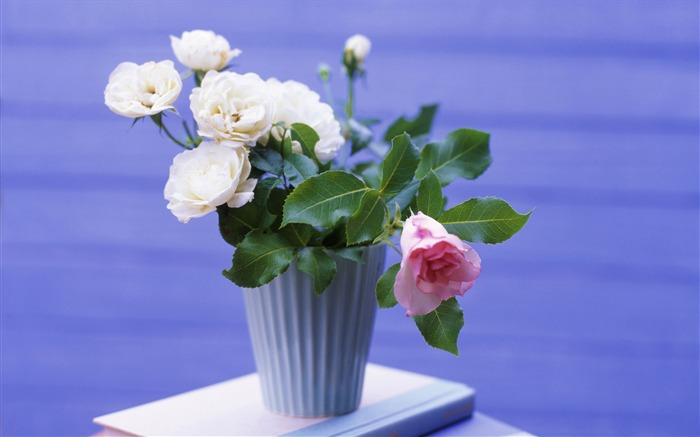 White pink flower pots-Seasonal flowers Views:9931
