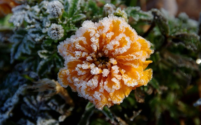 Wild flowers in the snow-Summer romance Feelings Views:6310 Date:9/8/2011 6:44:37 AM