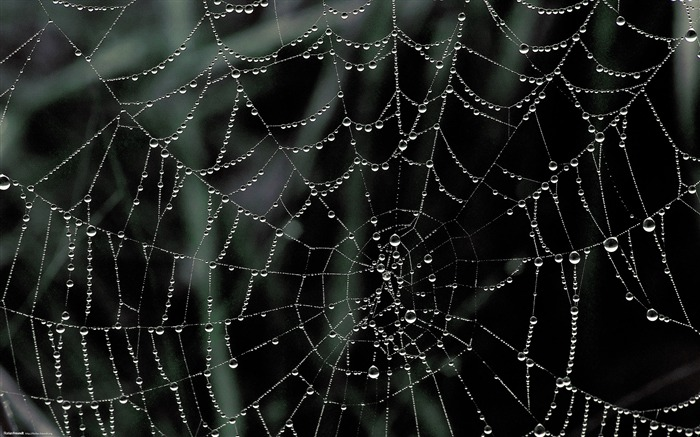 dew covered spider web-Nature Landscape wallpaper selected Views:30154 Date:9/28/2011 12:20:55 AM
