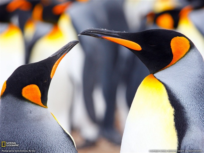 Animal World - National Geographic wallpaper selected Views:14797