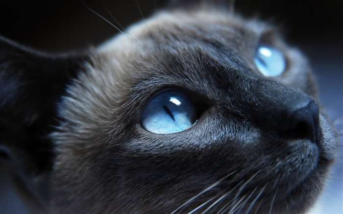 Black Cat with Blue Eyes 01-Cute little kitty cat living wallpaper Views:89937