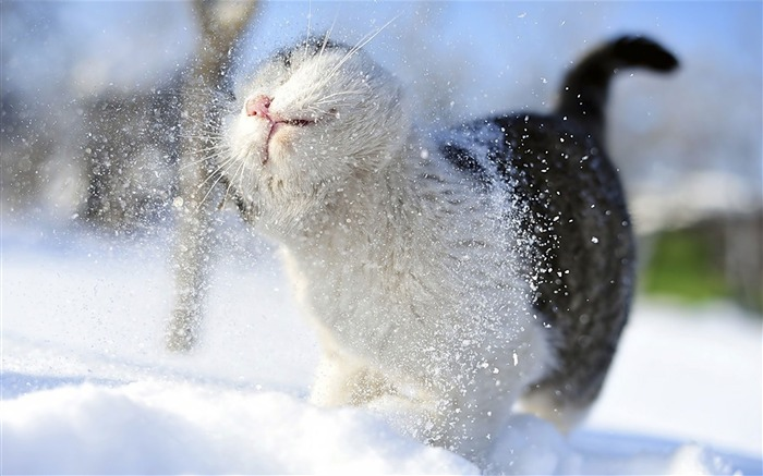 Kitty cat in snow-Cute little kitty cat living wallpaper Views:45553