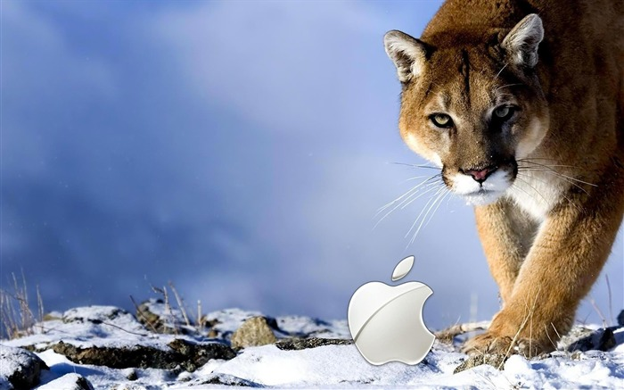 apple wild-Well-known brand image display desktop wallpaper Views:5116