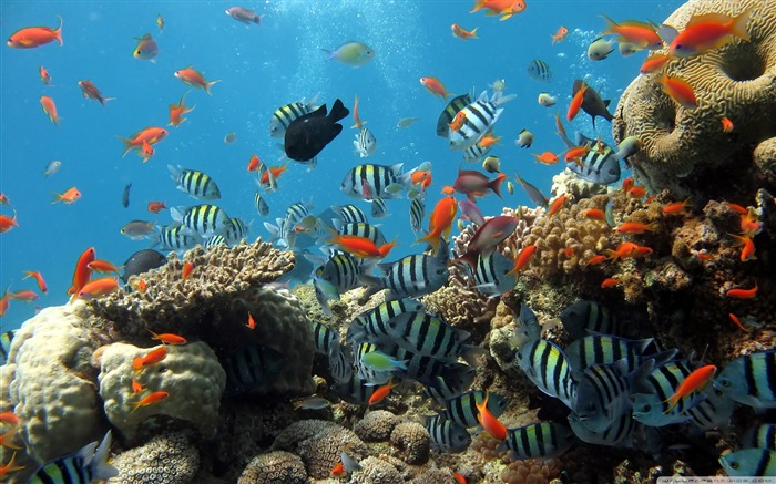 reef-The mysterious world of the sea Desktop Wallpapers Views:8069