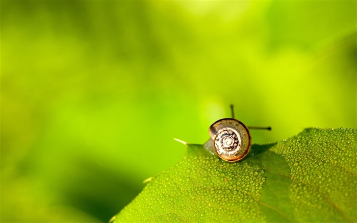 Little world-snail desktop picture album Views:11472