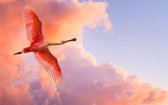 Free to fly - birds Desktop Wallpapers Views:11286