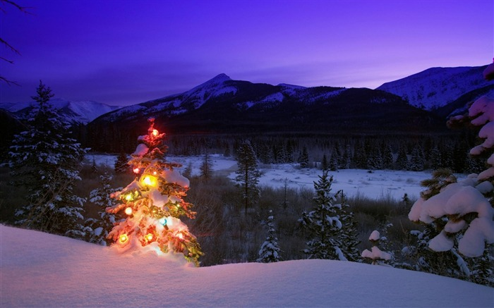 christmas tree with lights outdoors in the mountains-Christmas Desktop Pictures Views:5972