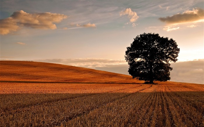 lone tree in field autumn-Beautiful natural scenery Desktop Wallpapers Views:13477