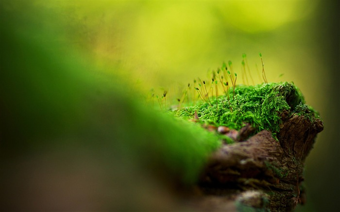 moss-Macro Photography Photo Series wallpaper Views:7894 Date:11/9/2011 11:11:45 PM