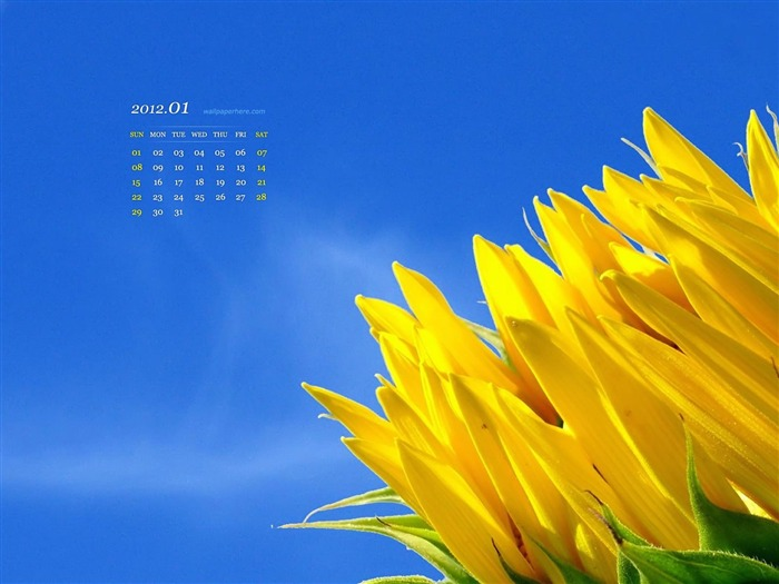 Flower HD-January 2012 calendar desktop themes wallpaper Views:11430 Date:12/30/2011 11:48:32 PM
