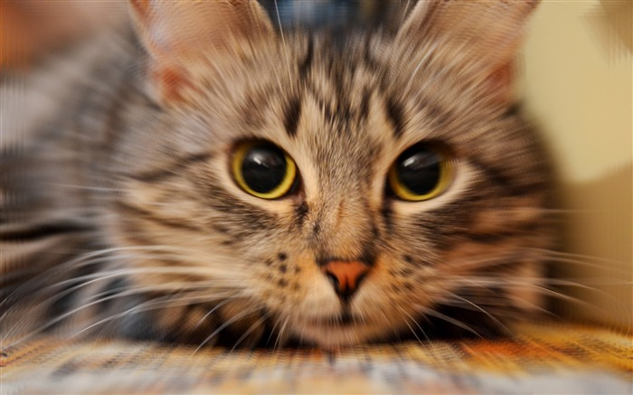 Cute pet cat desktop pictures wallpaper Views:28944