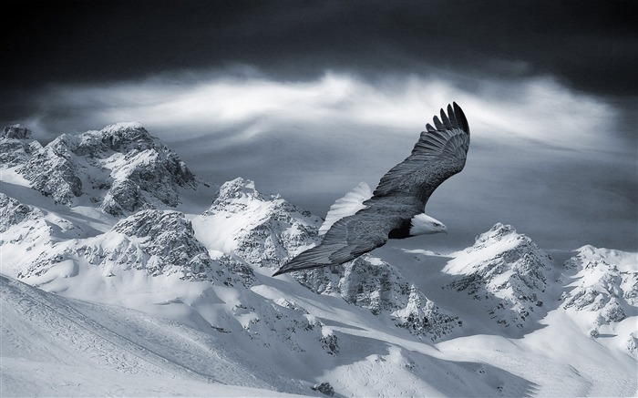 bald eagle flying over mountains-winter theme desktop wallpaper Views:10458 Date:12/29/2011 10:03:27 AM