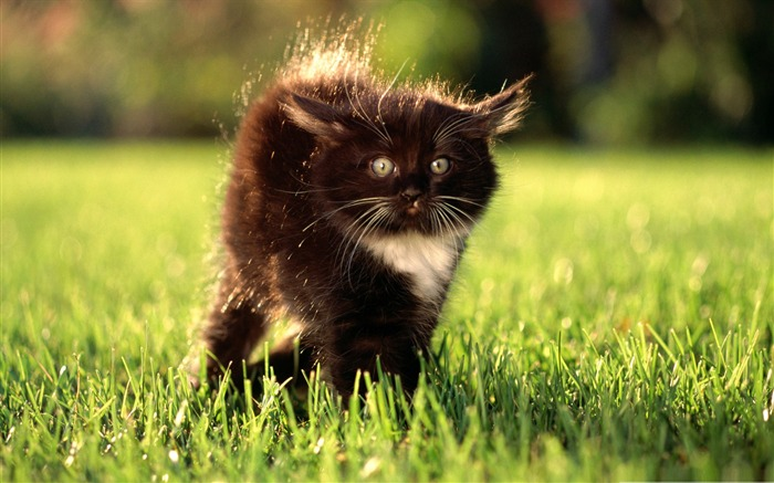black fluffy kitty-Cute pet cat desktop pictures wallpaper Views:6890 Date:12/18/2011 1:51:19 PM