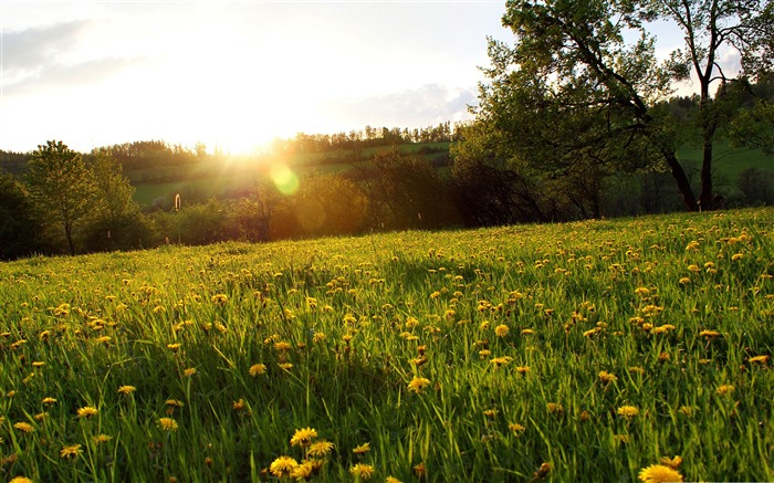 spring meadow-Nature Landscape Wallpaper Views:16255