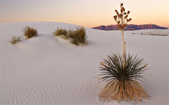 white sand desert-Amazing desert scenery Desktop Wallpapers Views:3583