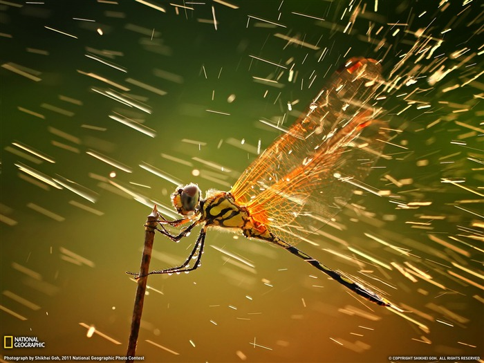 Dragonfly Indonesia-Landscape photography theme wallpaper Views:19845 Date:1/23/2012 2:55:12 PM