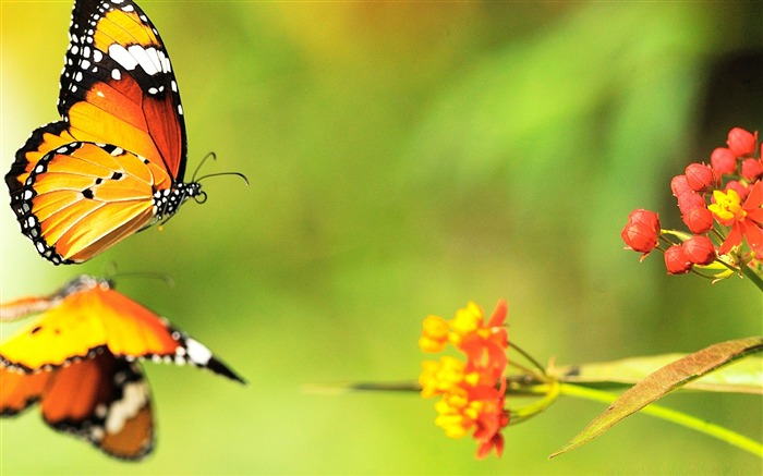beautiful butterfly 03-the beautiful butterfly desktop wallpaper Views:7376