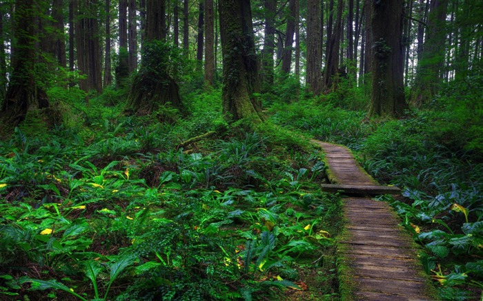 beautiful forest path-forest landscape desktop wallpaper Views:15085