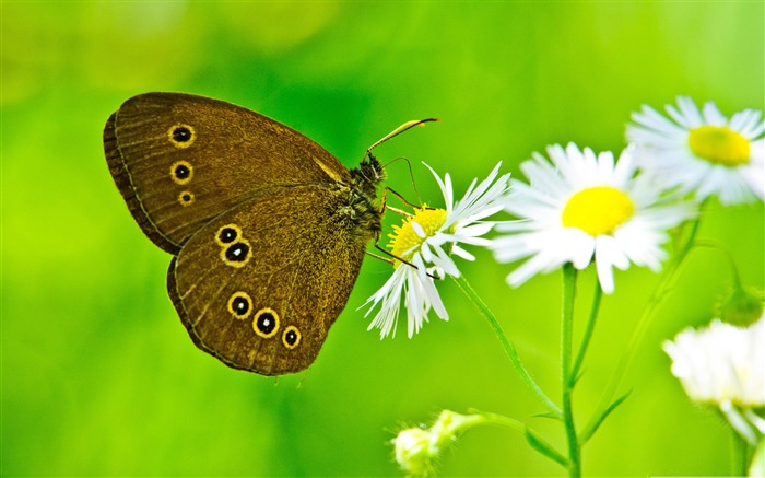Magnificent transformation-the beautiful butterfly desktop wallpaper Views:12402