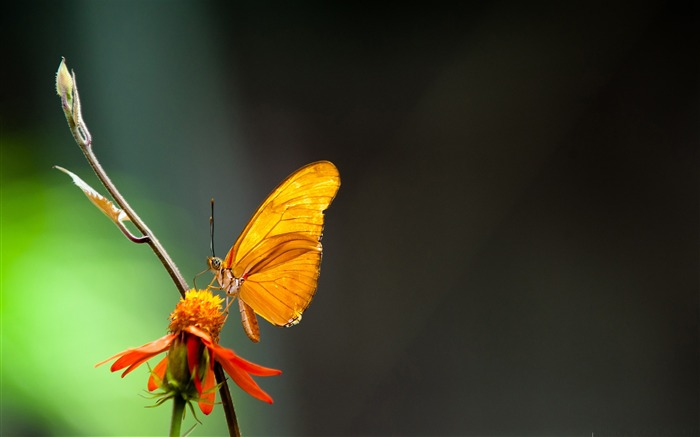 butterfly in the light-the beautiful butterfly desktop wallpaper Views:6311