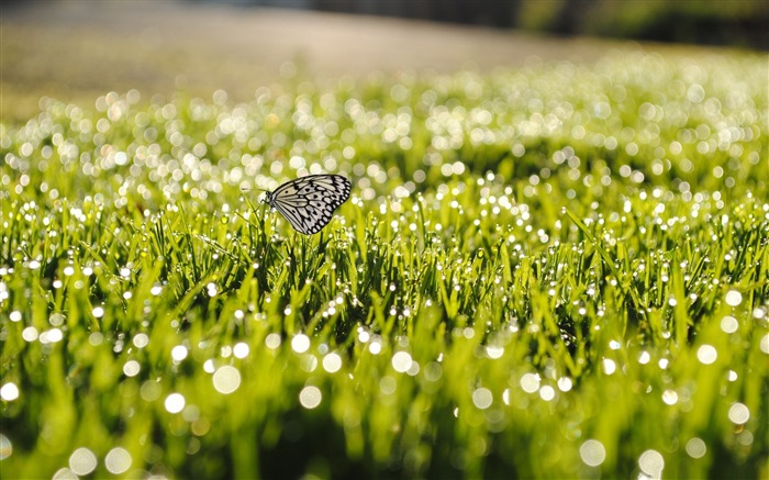 butterfly on grass-the beautiful butterfly desktop wallpaper Views:13518