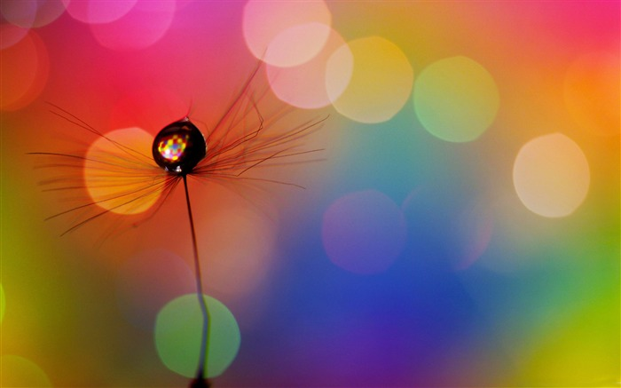 drop in a dandelion seed-Dream glare colorful design theme wallpaper Views:9571