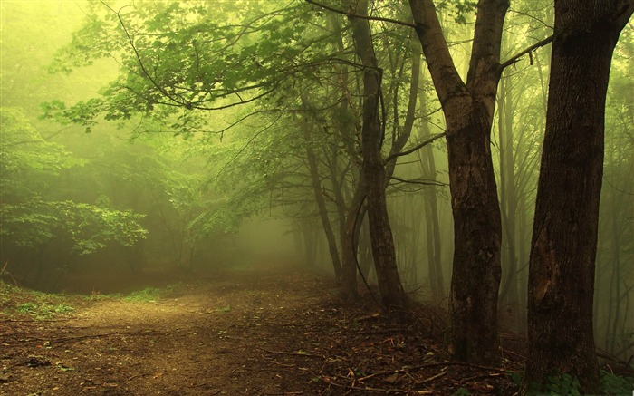 forest fog-forest landscape desktop wallpaper Views:23438