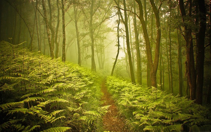 forest path-forest landscape desktop wallpaper Views:9125